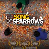 nyanyian si burung pipit – THE SONG OF SPARROWS –