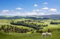 Pegunungan, Selandia Baru