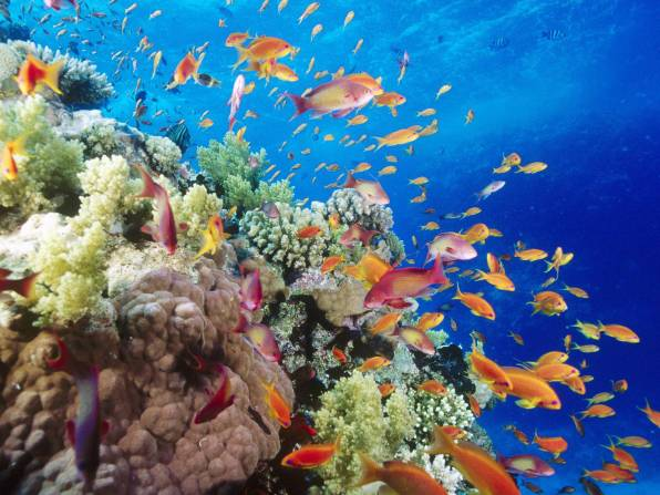 Coral-Reef-Southern-Red-Sea-Near-Safaga-Egypt