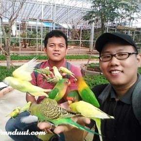 Serunya Diserbu Burung di Palembang BirdPark