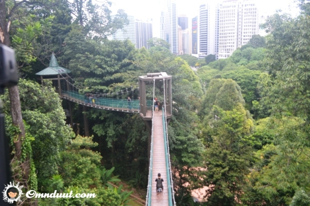 canopy-walk-3