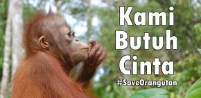 #SaveOrangutan : Demi Cinta Kita Terhadap Anggi, Usro, Kumba &Teman-temannya