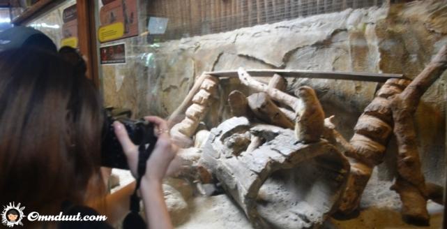 zoo-posting-3