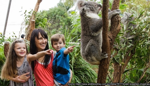 koala_breakfast_image