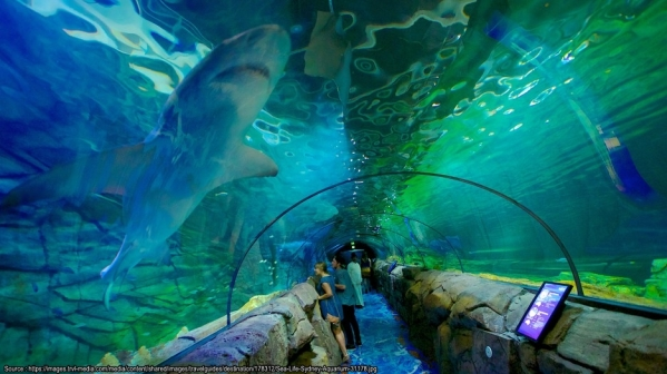 sea-life-sydney-aquarium-31178
