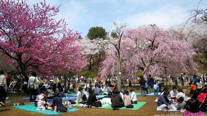 amazing-festival-hanami