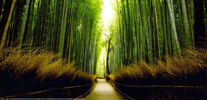 amazing-nature-arashimaya