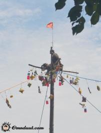Monyet bisa panjat pinang hehe