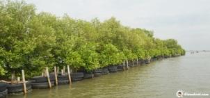 Pagar mangrove :)