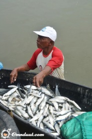 Ikannya banyak!