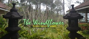 Pengalaman Dikepung Monyet di The Windflower