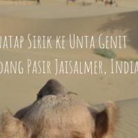 Menatap Sirik ke Unta Genit di Padang Pasir Jaisalmer, India