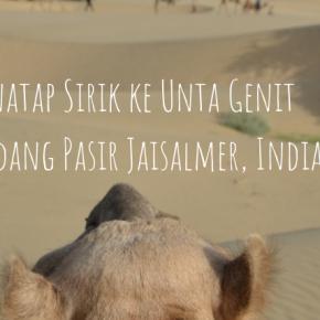 Menatap Sirik ke Unta Genit di Padang Pasir Jaisalmer,India