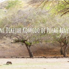 Berani Dikejar Komodo di PulauRinca?