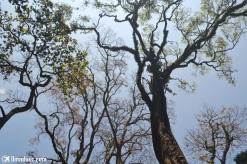 Keindahan hutan di Kerala